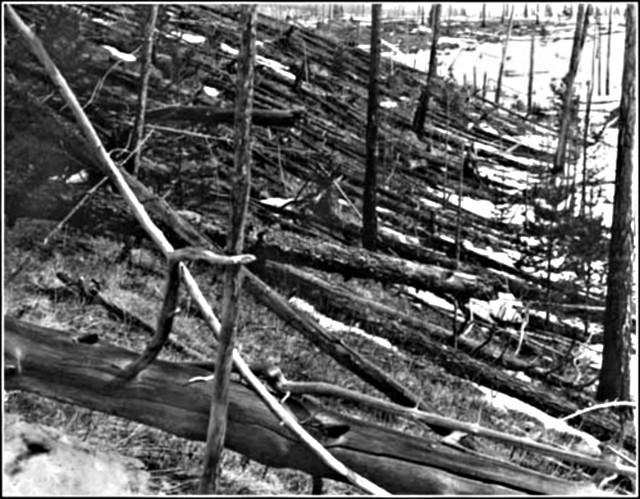 Сплошной вывал леса