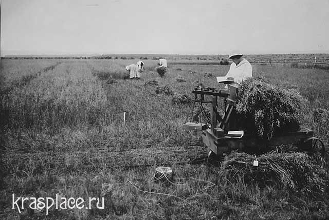 Опытное поле в Минусинске
