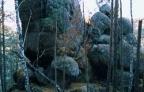 orlik